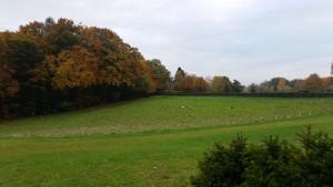 Groesbeek area hotel (6)